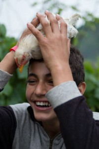 poule_albanie